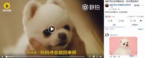 (圖:韓國 LG U+《搖籃曲的秘密》在臉書上被轉貼的影片/取自:FB粉專 貓貓狗狗世界趣聞快快樂樂毎一天)