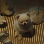 當狗狗獨自在家時 … !IoT 如何巧妙拉近人與寵物的距離 韓廣告賺百萬熱淚