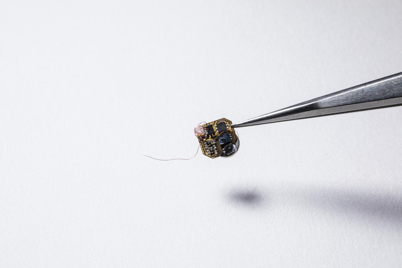 (華盛頓大學的研究人員,開發了一種微型傳感器,可以背在大黃蜂上,重約102毫克。圖/UW)