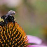 全球最小的無人機!大黃蜂的「背包」如何協助農業數位轉型?