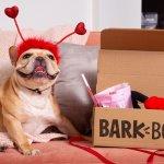 寵物玩具也推訂閱制!紐約新創 5 年賣出 2 億 美金