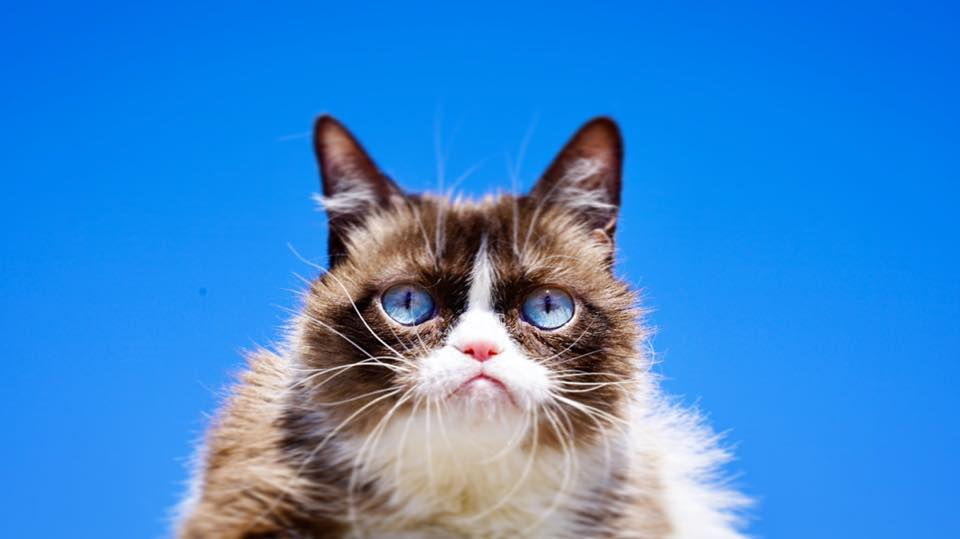 臭臉貓近照|數位行銷