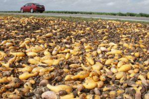 全球每年浪費的食物近 13 億公噸 市場動態